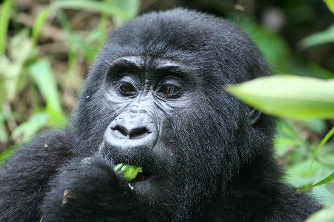 3 Days Game drive and Gorilla Trekking; Rwanda-Uganda