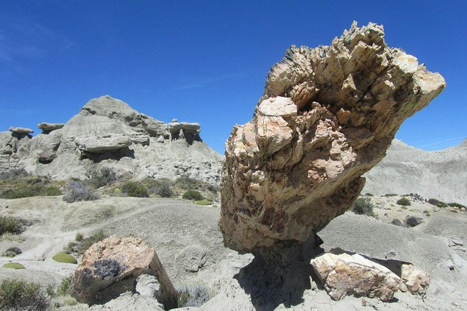 Day Trip to the spectacular Petrified Forest La Leona