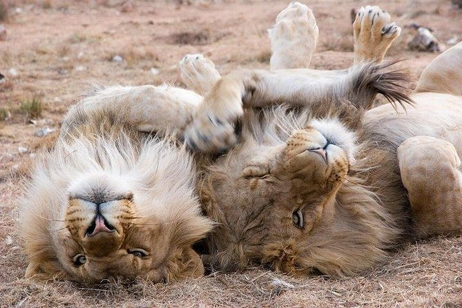 The Best Day Safari from Cape Town, no malaria