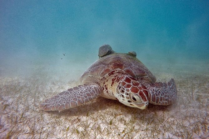 Tulum and Swim with Turtles from Playa del Carmen