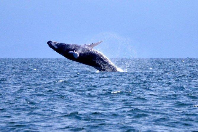 Whale Watching Samaná Pick-up in Las Terrenas Hotels Half day trip