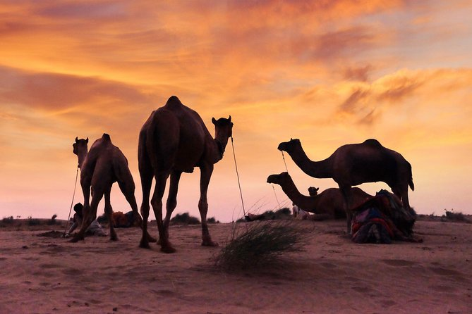 Only You & Thar Desert – Camel Safari Without Tourist Crowd