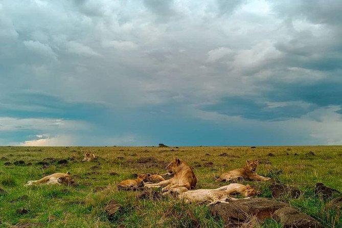 5 Days Masai Mara Lake Nakuru Lake Naivasha