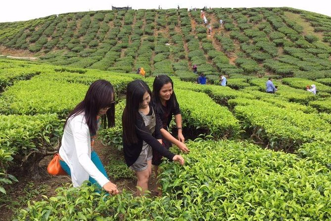 Lush Cameron Highlands Full Day Nature Tour