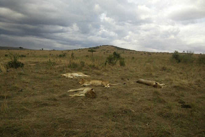 10 Days Kenya & Tanzania Combined Safaris photo 1