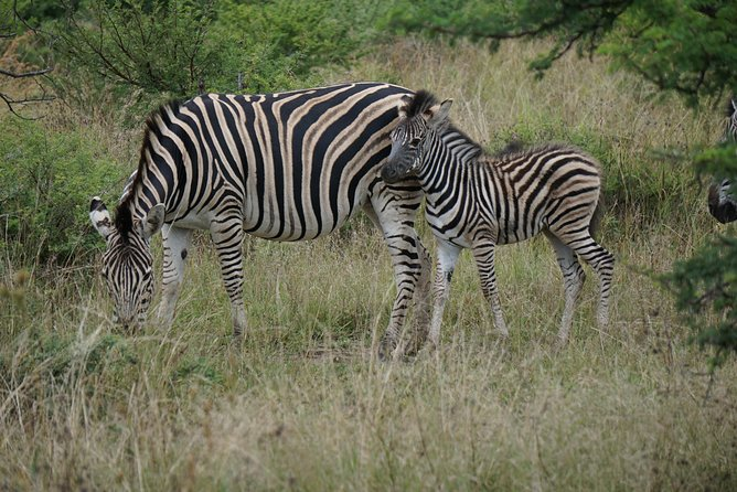 3 Days Tanzania Safari Tarangire, Manyara & Ngorongoro With Burigi Chato Safaris
