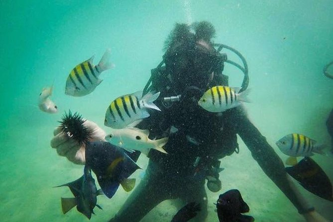 Discovery Scuba Diving in Dubai