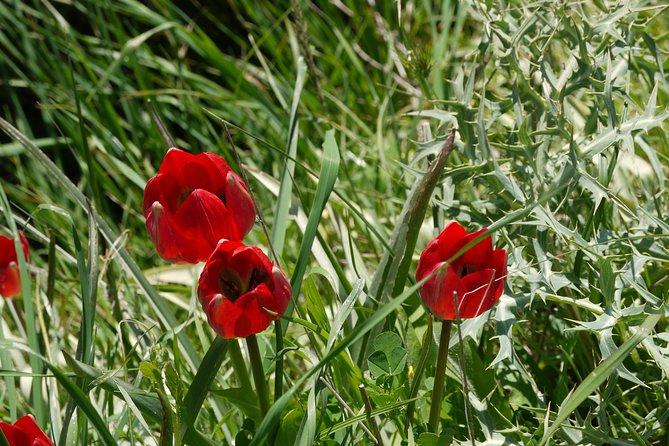 Flower Power - Lotus Land