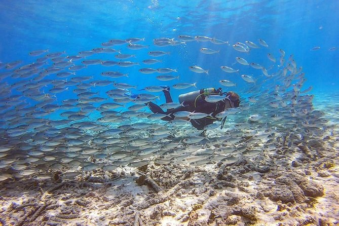 Diving or snorkeling with your own private guide on Bonaire