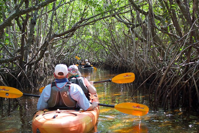 Manatees and Mangrove Tunnels Small Group Kayak Tour