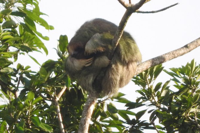 Private Tour of Birds and Sloths in Bijagua de Upala