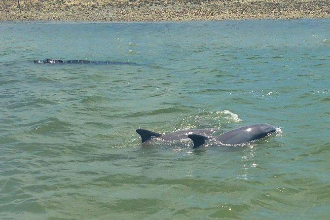 Tour de barco com experiência em golfinhos