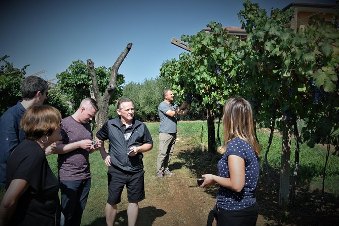 Wine and Olive oil tours photo 9