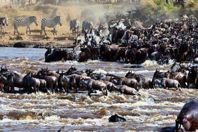 8 Days Great Wildebeest Migration - Mara River Crossing
