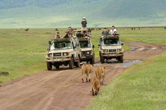 Day trip Ngorongoro