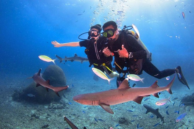 Introductory Dive with Reef Sharks Day Cruise