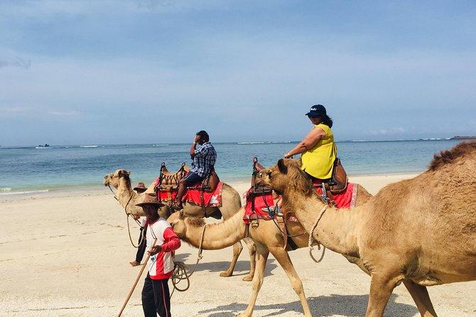 BALI HOLIDAY TRANS#Bali Camel Adventure#