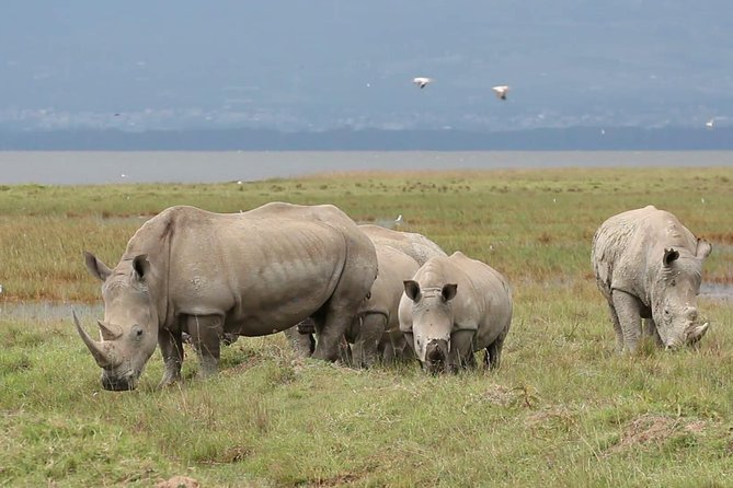 Lake Nakuru National park Day Tour From Nairobi photo 6