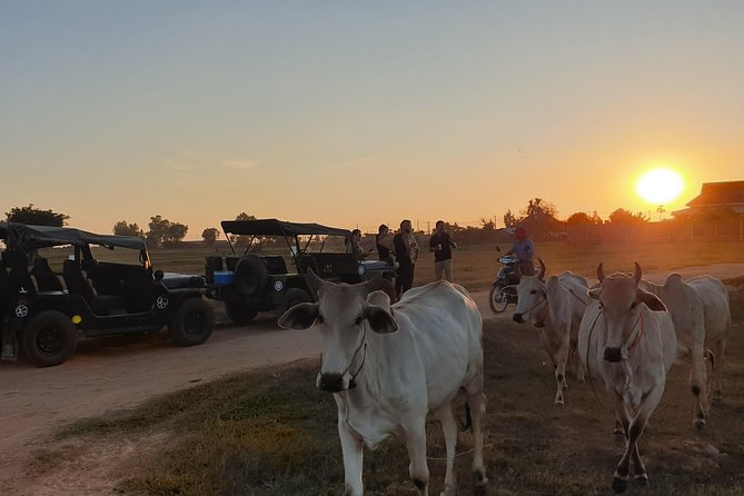 Sunset with Cows