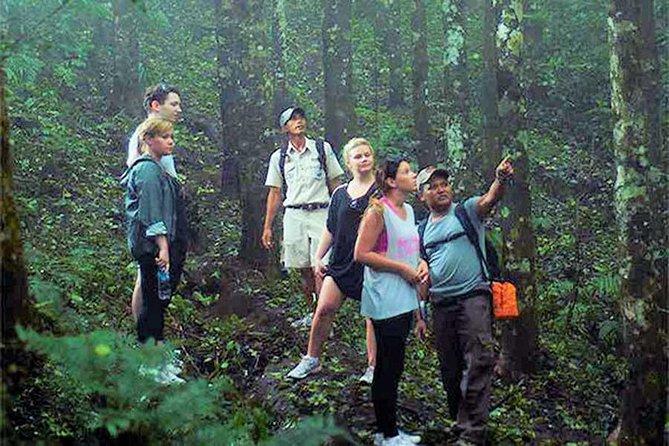 True Bali Experience - Rain Forest Trekking