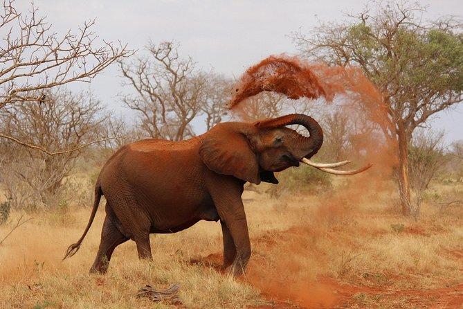 2 Days Tsavo Safari Adventure Nairobi Kenya !