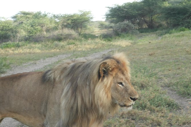 Tanzania Big Five Safari 9days