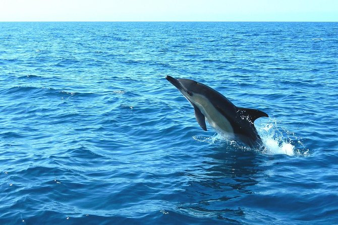 Dolphin Watching with transfer