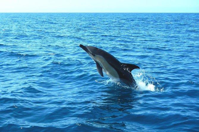 Osservazione dei delfini