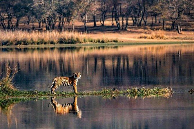 Pickup Jaipur & Trip to Ranthambore National Park with Private Safari Frm Jaipur