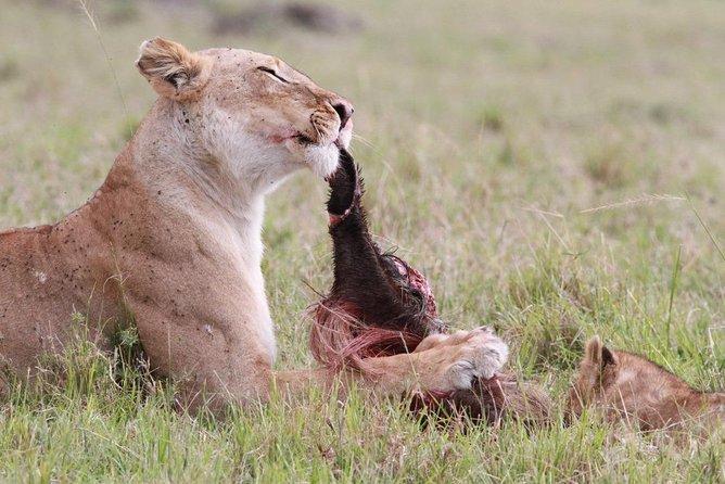 4 Day Lake Nakuru and Masai Mara
