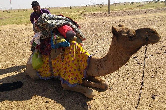 Full day Camel Safari