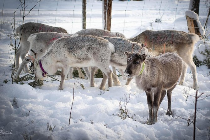 Our baby reindeer are waiting for you.