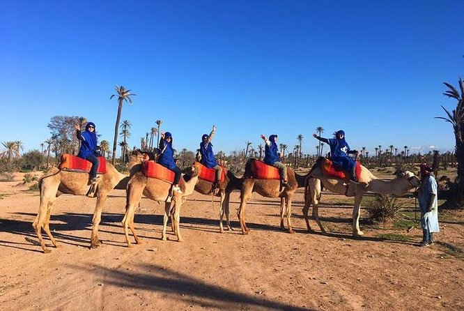 Private Camel ride in Palm groves Marrakech