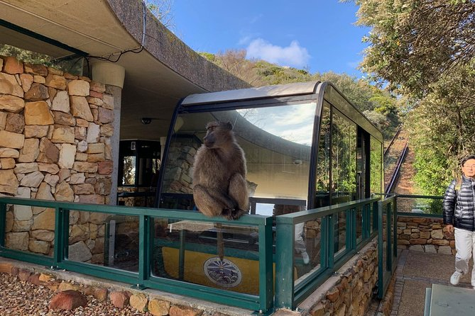 Cape of Good Hope-Wine Tasting-Penguin & Table Mountain Tickets Small Group Tour