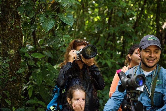 Cockscomb Jaguar Reserve Birdwatching Experience
