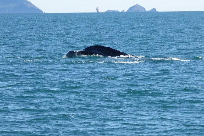 4 Hour Whale Watching/Eco Adventure photo 3