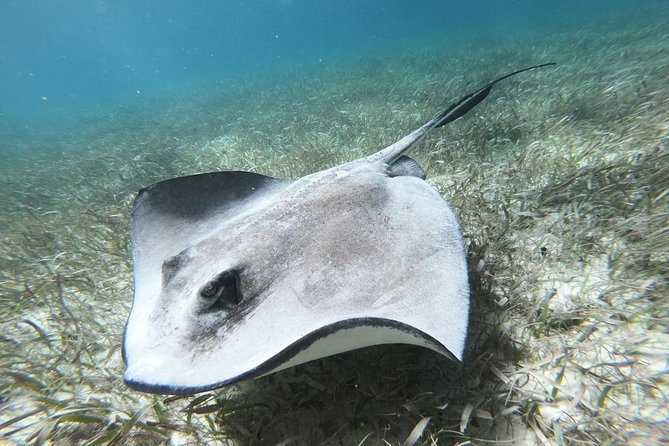 Barrier Reef Adventure With Green Moray Eel,Sting Rays Alley and Beach break