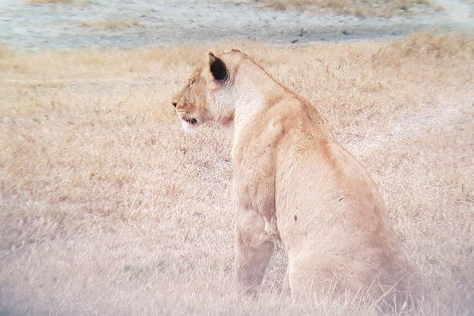 Serengeti Magical Tour
