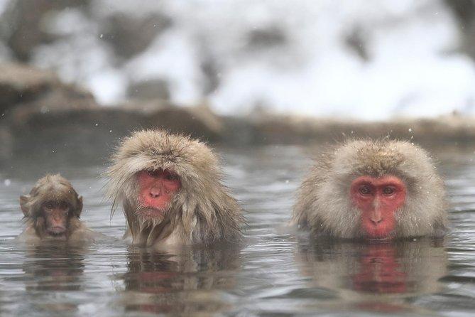 From Tokyo, Amazing tour to Jigokudani Monkey Park (Nagano, Snow Monkey)!!