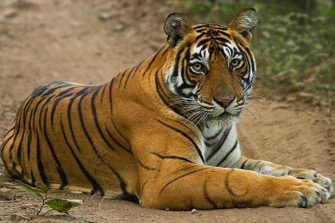 Overnight trip to land of Tiger's – Ranthambore National Park from Jaipur
