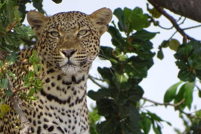 6 Days Tanzania Classic Safari