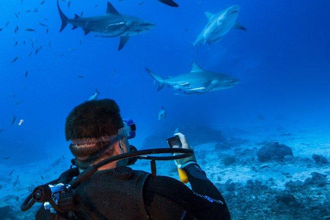 'Awakening Big Shark Dive' Day Cruise