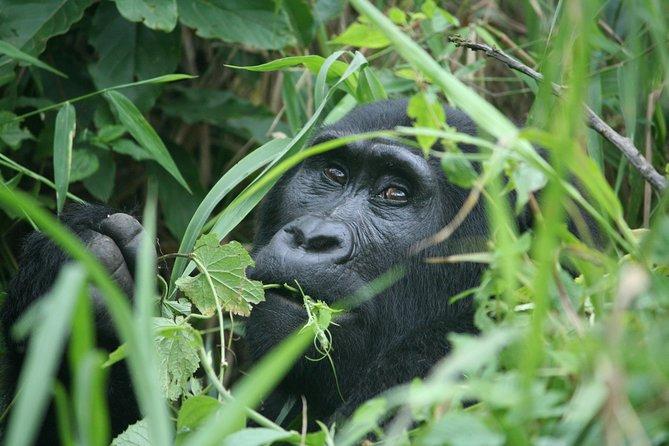 3 days Gorilla Trekking and Game Drive: Rwanda-Uganda