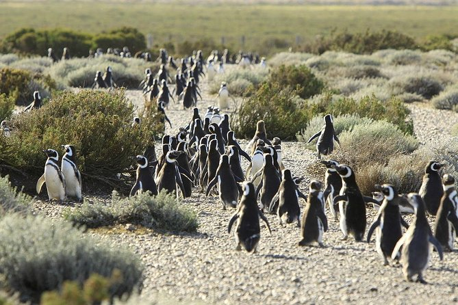 Puerto Madryn: Peninsula Valdes Norte - Penguin Colony and Whale Watching