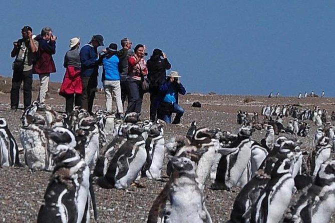 Puerto Madryn: NORTH VALDÉS PENINSULA WITH SAN LORENZO & PINGÜINERA STAY