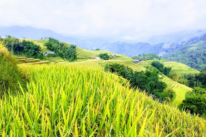 2 Days Private - Hike Up Hill Rice Terraces, Bamboo Forest