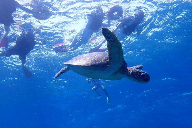 Naha/Kerama/1Day: Snorkeling with Sea Turtles+Marine Sport(1 Item)+Desert Island