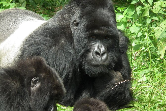 Complete Uganda Wildlife and Gorilla Trekking 11 Day Safari photo 16