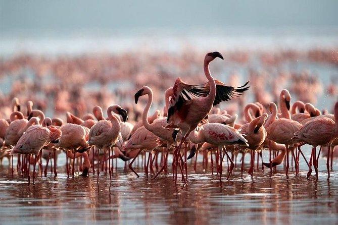 3 Day Bird Watching Safari : Lake Bogoria, Lake Naivasha & Lake Nakuru park
