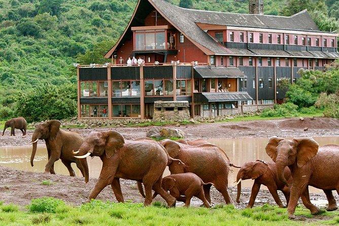 4 Days Aberdares National park & Samburu National Reserve Wildlife Safari
